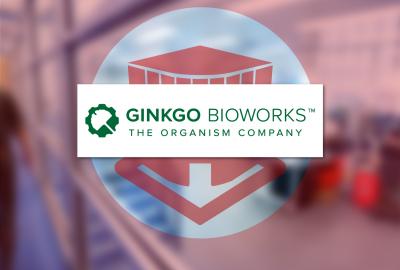 Ginkgo-square
